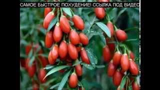 Ягоды Годжи для похудения - Купить Ягода Годжи - [ягоды годжи]