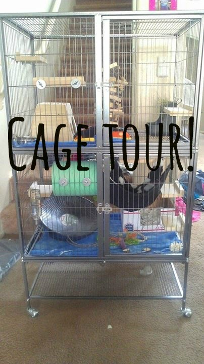 Feisty Ferret Cage Tour Youtube