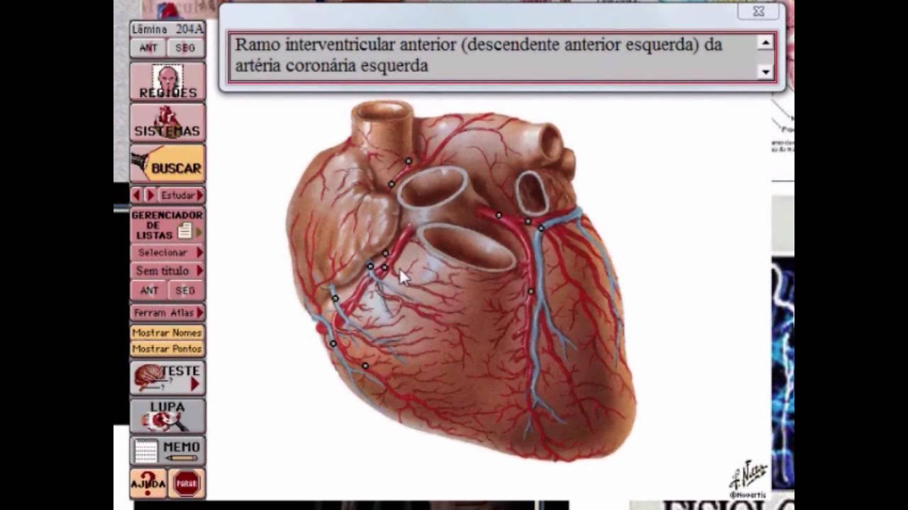 Explicativo CD-ROM Netter Anatomia - YouTube