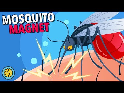 Why Are We So Delicious To Mosquitos?