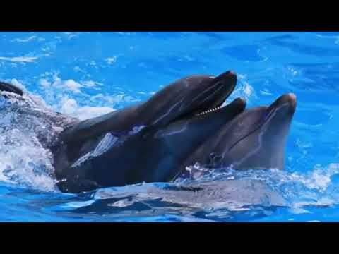Dolphin sounds Music