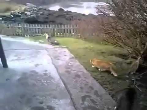 Mèo chơi khăm mèo