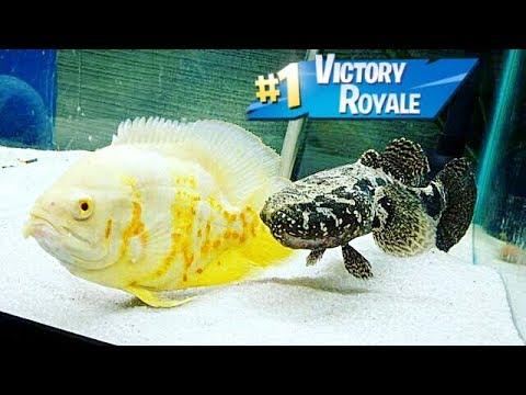 FISH BATTLE ROYAL in TANK! Craziest FISH WINS!