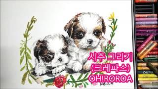 [OH!RORA] 강아지 시츄 그리기 (오일파스텔)