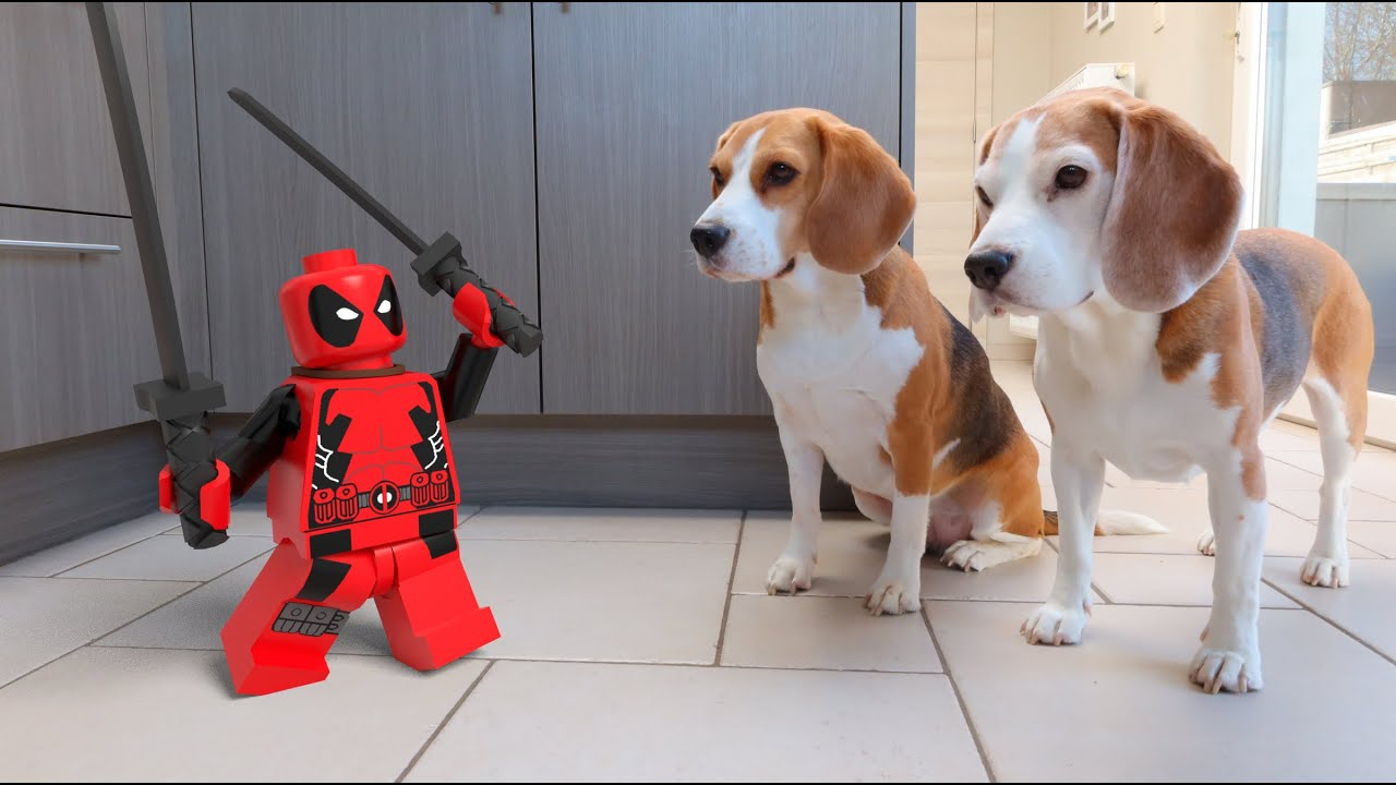 Animations in Real Life Compilation : Angry LEGO Characters!