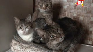 Жительница осажденной Горловки, приютила более 30 брошеных кошек