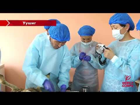 Mercy Corps Mongolia | Veterinary Training on Necropsy & Sampling
