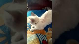 Кошка мура ложится отдыхать