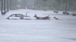 הצפות אחרי סופת ההוריקן פלורנס צפון קרוליינה ארה