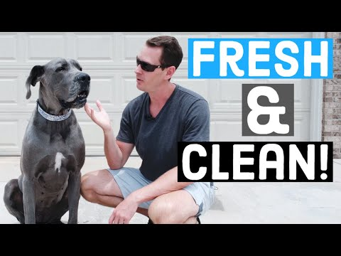 Efficient Weekly Grooming Routine for Great Danes!
