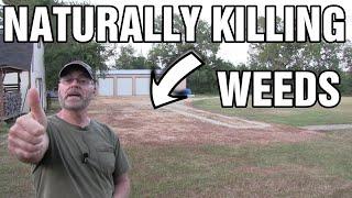 DIY natural driveway weed and grass killer