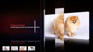 Груминг собак и кошек.  Грумрум Катерины Долецкой