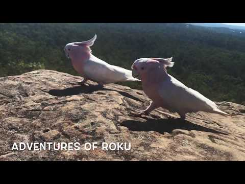 Hiking with Parrots Part 1 of 2