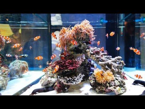 How to Clean Fish Tank Sand | Aquarium Care