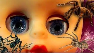 Трэш Куколка и «Паучье чутье» - Вредные игрушки