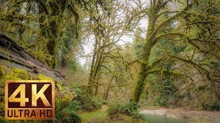 4k (ultra hd) virtual forest walk | redwood national and state parks/trailer