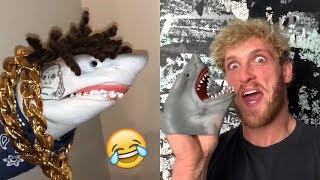 FUNNIEST Shark Puppet Videos Compilation - BEST Shark Puppet Vines and Instagram Videos