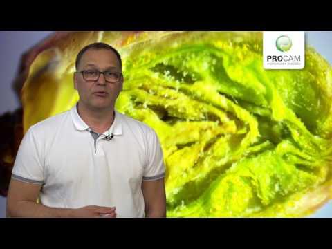 Komunikat sadowniczy - zalecenia PROCAM z 5.04.2017