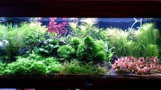 Опять эти ужасные водоросли  / Борода и Кладофора в аквариуме / 160 л.
