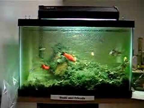 2 5 gallon tropical fishtank 15 fish youtube for Two gallon fish tank