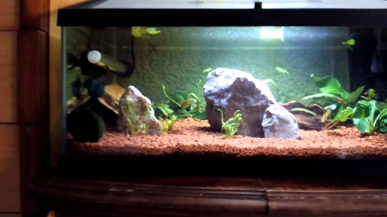 Mejor acuario para bettas del mundo youtube for Mejores peces para acuario