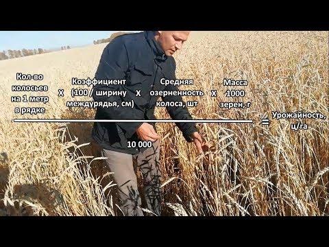 Как узнать урожайность с 1 га
