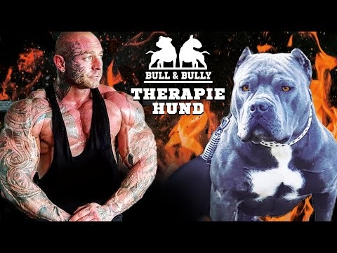Drogensucht Ein American Bully Als Therapiehund Youtube