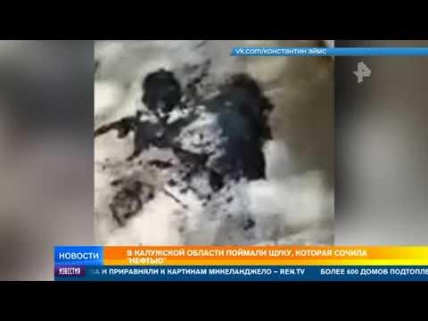 """В Калужской области поймали щуку, которая сочила """"нефтью"""""""