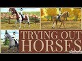 Trying Out Horses: Horse Shopping For my Next Eventer    Star Stable Realistic Roleplay