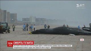 Мертвий горбатий кит перегородив узбережжя Нью Йорка