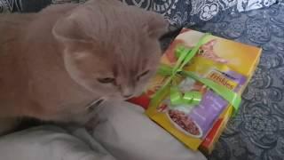 Подарки на 8 марта бывают разными. Смешные приколы с животными коты котики кошки