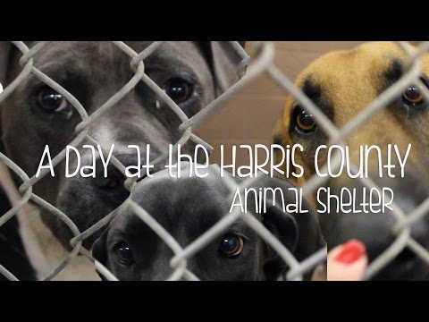 A Day at the Harris County Animal Shelter