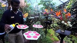 Butterfly House Live Cam