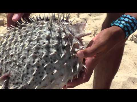 Самые красивые рыбы Красного моря-это надо видеть! - The most beautiful Red Sea fishes