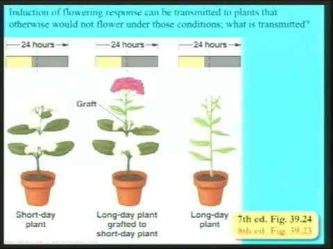 Lecture 39. Plant Hormones and Growth Regulation (Biology 1B, Fall 2010, UC Berkeley)