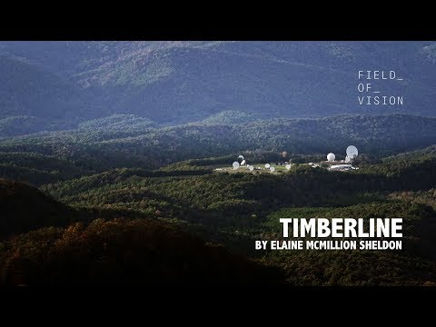 Field of Vision - Timberline