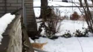 Cairn Terrier Fabius Toilet Training Lesson One