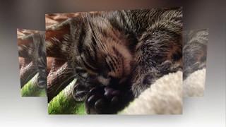 Домашняя кошечка Мася – 2, Лучшие Стоп- кадры, Homemade cat Masya -2, Best stills.)