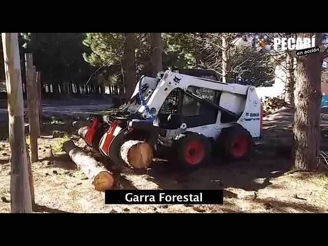 Garra Forestal | Juan Salvagno de San Martín de Los Andes