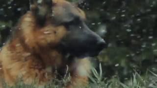 фильм Костя трейлер Full HD