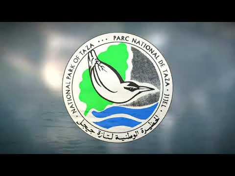 Marine biodiversity in Taza National Park, Algeria
