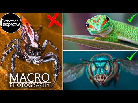 My Best Tips For Better Macro Photography
