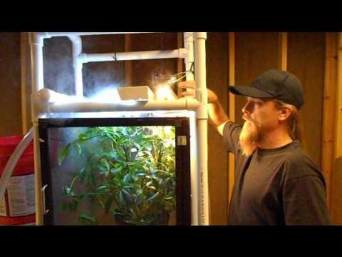 Jacksons Chameleon Video