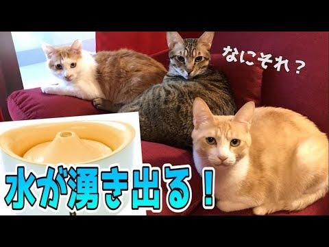 水が湧き出る給水器に興味津々な猫たち!