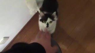 猫に躾を・・・これは成功したのだろうか? 右より左足の方が好みみたい。