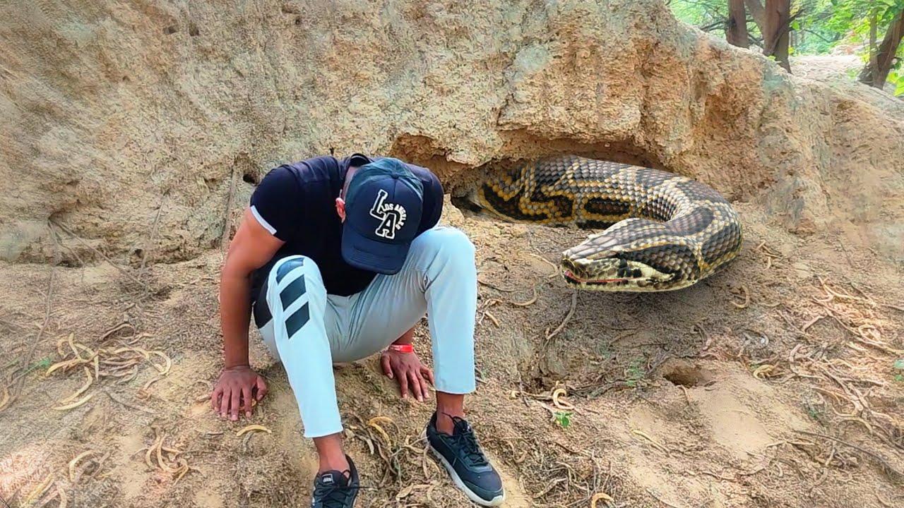 Anaconda Snake in Real Life Video 2