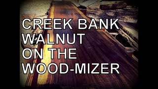 SAWING AMAZING CREEK BANK WALNUT ON THE WOOD-MIZER