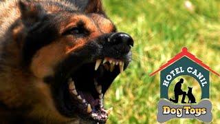 Cão de guarda em Treinamento - Dog Toys Hotel Club