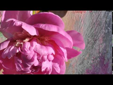 Pigment:Malerei Trifft Pflanzenfarbe - Feli:::Arts