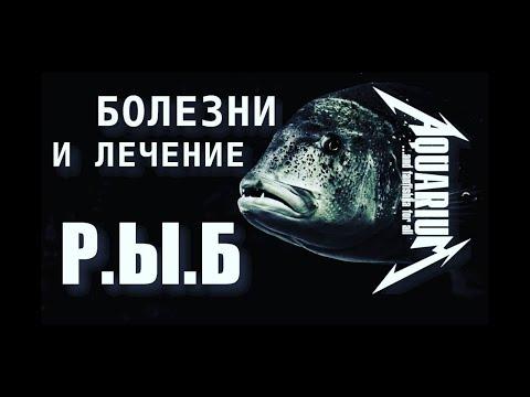 Болезни и лечение рыб`ок